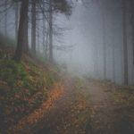 霧がかかった森の中