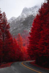 紅葉の冬山