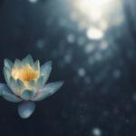 蓮の花に光が降り注いでいる画像