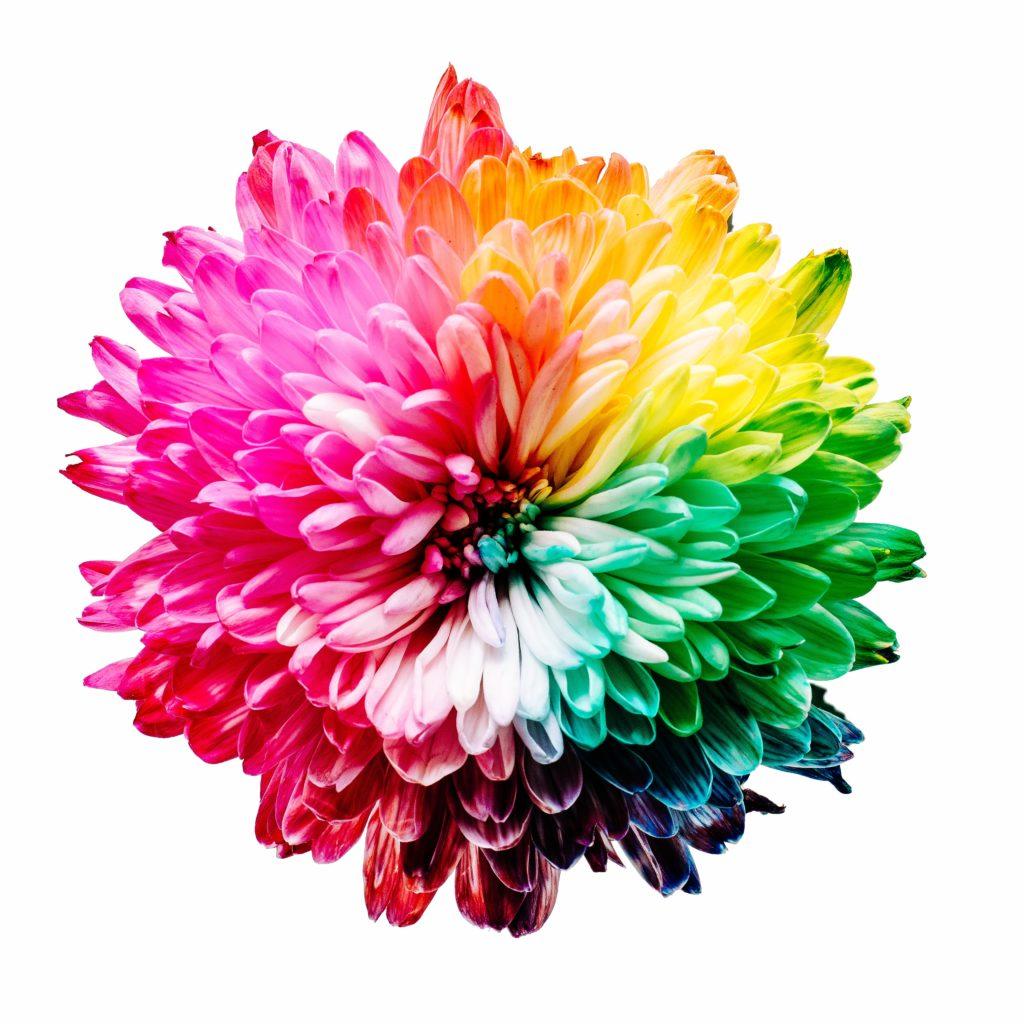 七色の花の写真