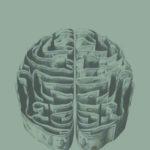 お札でできた脳の画像