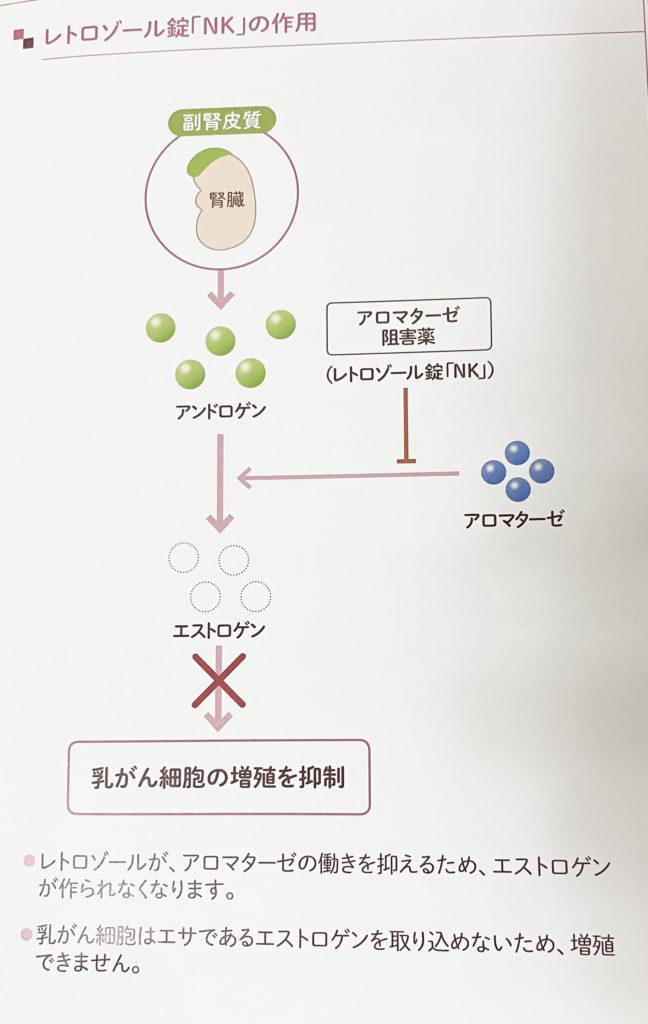 レトロゾールの説明の冊子