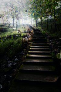 山の中の階段の写真