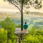木の途中に板で作った踊り場みたいなものがあって、そこに梯子がかけてあり、その踊り場に男性が座って風景を眺めている